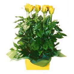 11 adet sari gül aranjmani  Eskişehir hediye çiçek yolla