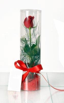 Eskişehir çiçekçiler  Silindir vazoda tek kirmizi gül