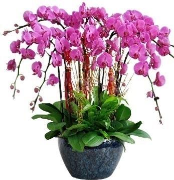 9 dallı mor orkide  Eskişehir çiçek yolla , çiçek gönder , çiçekçi