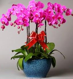 7 dallı mor orkide  Eskişehir çiçek yolla