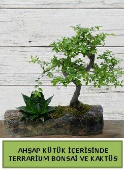 Ahşap kütük bonsai kaktüs teraryum  Eskişehir çiçek servisi , çiçekçi adresleri