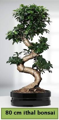 80 cm özel saksıda bonsai bitkisi  Eskişehir çiçek siparişi vermek