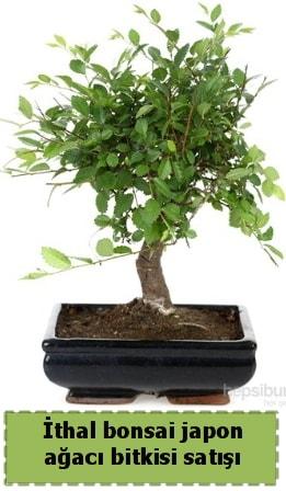 İthal bonsai saksı çiçeği Japon ağacı satışı  Eskişehir çiçek siparişi sitesi