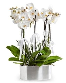 Beş dallı metal saksıda beyaz orkide  Eskişehir çiçekçiler