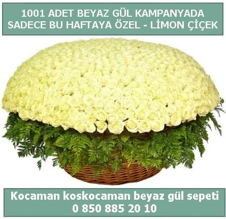 1001 adet beyaz gül sepeti özel kampanyada  Eskişehir internetten çiçek satışı