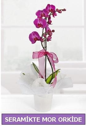 Seramik içerisinde birinci kalite tek dallı mor orkide  Eskişehir çiçek siparişi sitesi