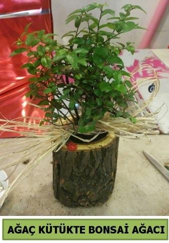 Doğal ağaç kütük içerisinde bonsai ağacı  Eskişehir internetten çiçek satışı