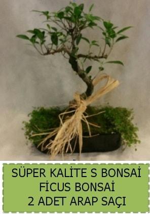 Ficus S Bonsai ve arap saçı  Eskişehir çiçek siparişi vermek