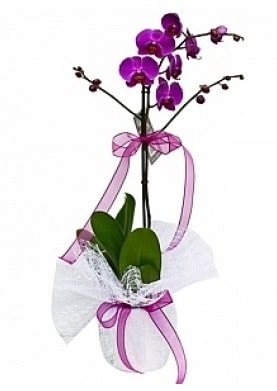 Tekli Mor Orkide  Eskişehir çiçekçiler
