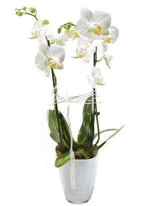 2 dallı beyaz seramik beyaz orkide saksısı  Eskişehir internetten çiçek satışı