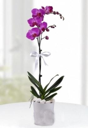 Tek dallı saksıda mor orkide çiçeği  Eskişehir çiçek online çiçek siparişi