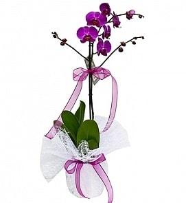 Tek dallı saksıda ithal mor orkide çiçeği  Eskişehir çiçek online çiçek siparişi