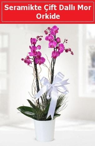 Seramikte Çift Dallı Mor Orkide  Eskişehir İnternetten çiçek siparişi