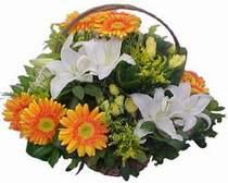Eskişehir hediye çiçek yolla  sepet modeli Gerbera kazablanka sepet